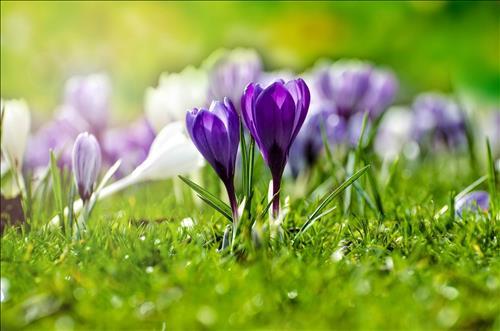 Tử vi Thứ 7 ngày 4/5/2019 của 12 cung hoàng đạo: Kim Ngưu thận trọng, Sư Tử đam mê