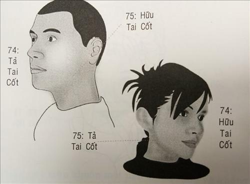 74-75-tai-cot