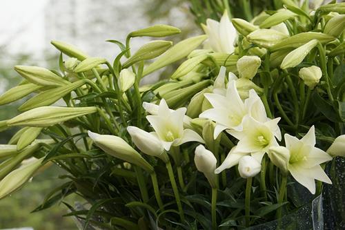 Chọn hoa cúng Tết Thanh Minh