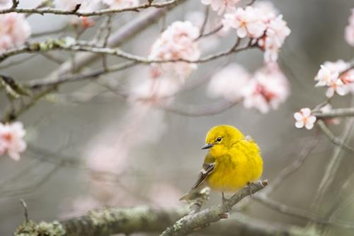 Tiết khí Xuân Phân