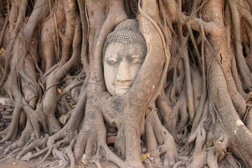 Tượng đầu Phật Ayutthaya ở Thái Lan