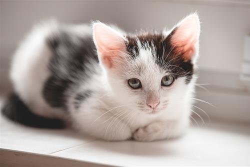 có phải mèo mang đến chuyện xui xẻo