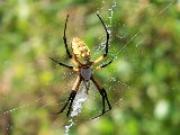 Mơ thấy nhện – lành ít dữ nhiều