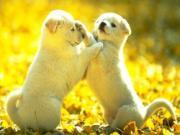 6 loài động vật gặp là rước hên vào người