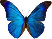 Sử dụng biểu tượng bướm thu hút may mắn