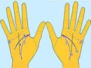 4 đường chỉ tay chính ai cũng tự xem được