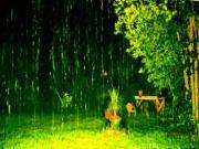 Mơ thấy mưa càng to sẽ càng may mắn