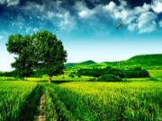 Giải mã giấc mơ về cánh đồng bao la