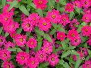 Khám phá giấc mơ mang tên các loài hoa (P1)