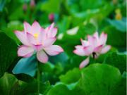 Khám phá giấc mơ mang tên các loài hoa (P2)