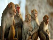 Thú vị với giấc mơ về con khỉ