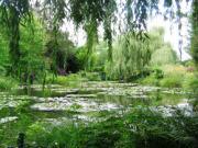6 loại cây có thích cũng không nên trồng trong vườn nhà