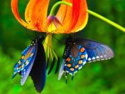 Bí ẩn cánh bướm trong giấc mơ