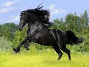 Giải mã điềm báo mơ thấy ngựa
