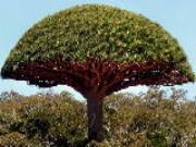 Phát huy tối đa may mắn nhờ trồng cây đúng hướng