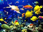 Gặp may mắn khi nằm mơ thấy cá