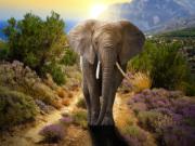Mơ thấy voi là phải đối đầu