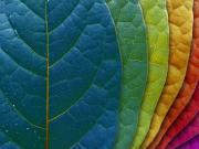 Những lỗi sử dụng màu sắc đại kị trong phong thủy