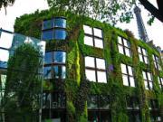 Ấn tượng những ngôi nhà đẹp phủ đầy cây xanh