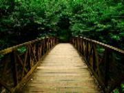 Chớ nên mạo hiểm nếu nằm mơ thấy cầu (P1)