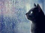 Bí ẩn đằng sau giấc mơ về cơn mưa, cơn gió