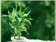 Cầu điều gì bày cây nấy để cải thiện phong thủy văn phòng