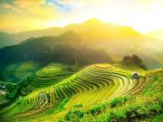 Ngắm những cánh đồng lúa mùa thu vàng đắm say lòng người