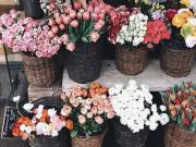 Nên chọn hoa gì đi tảo mộ trong tiết Thanh minh?