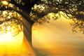 Tử vi Chủ nhật ngày 29/3/2020 của 12 con giáp: Mão đào hoa, Ngọ ảo tưởng